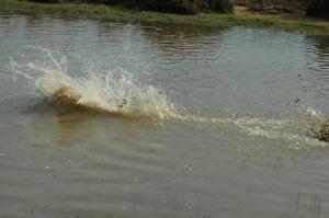 Splashhhhhhhh!