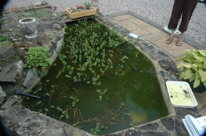 Typical effect of barley straw on a garden pond