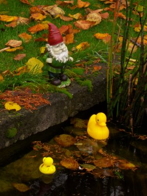 Gnome more ducks please