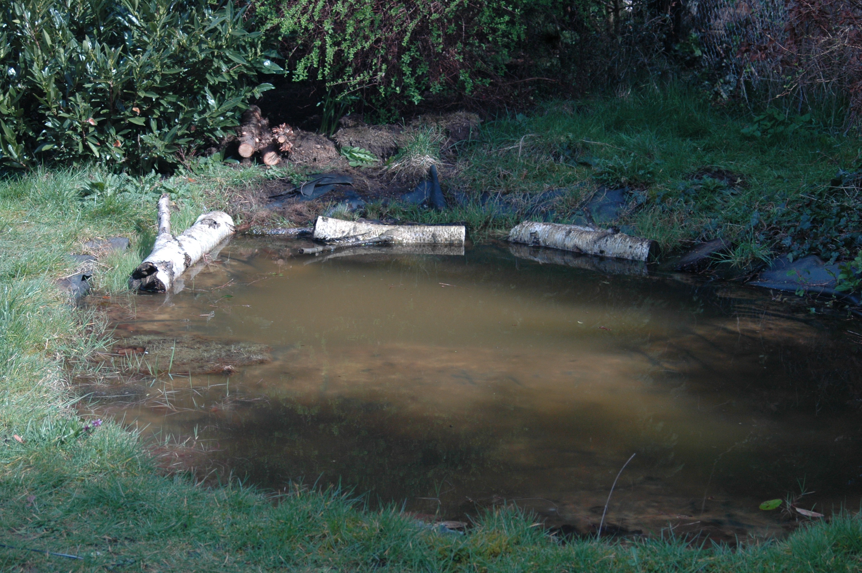 How big should my pond be the garden pond blog for Giant koi pond