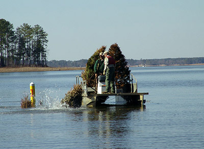 Biologists from the South Carolina Department of Natural Resources construct a fish attractor from Christmas trees