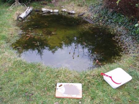 The garden pond today