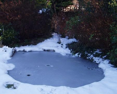 The garden pond, still frozen, yesterday