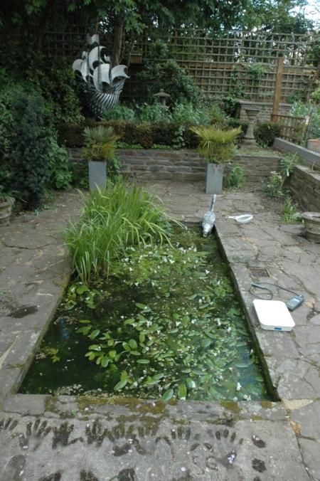 Time for a makeover: turning an ordinary garden pond into a clean-water wildlife pond