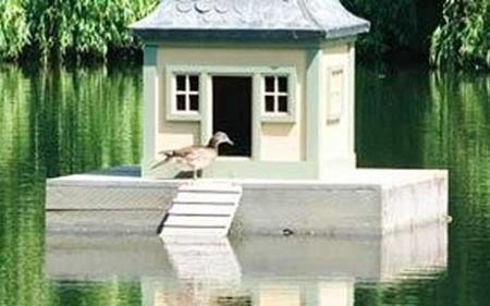 peter-vigger-duck-_1407400c