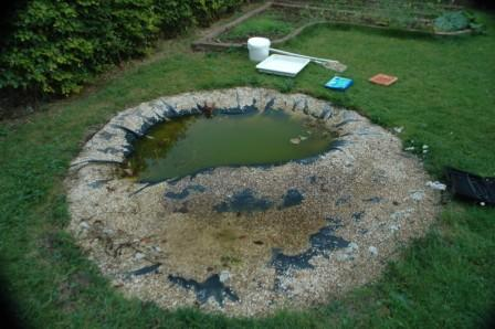 The new pond showing that looks aren't everything - it already has an unusally good crop of animals