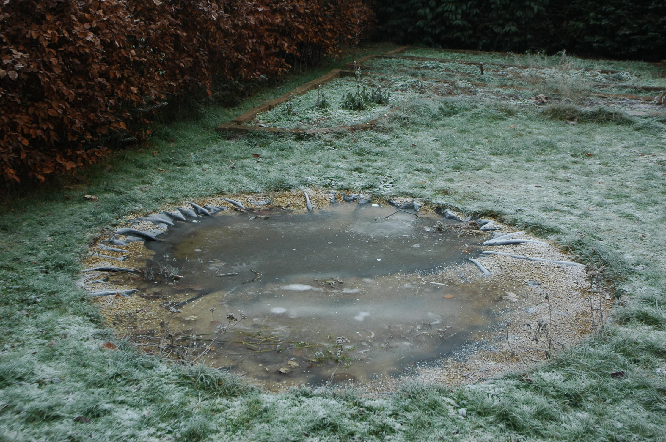 How To Empty Backyard Pond : The new pond today is completely frozen over beneath the ice, the