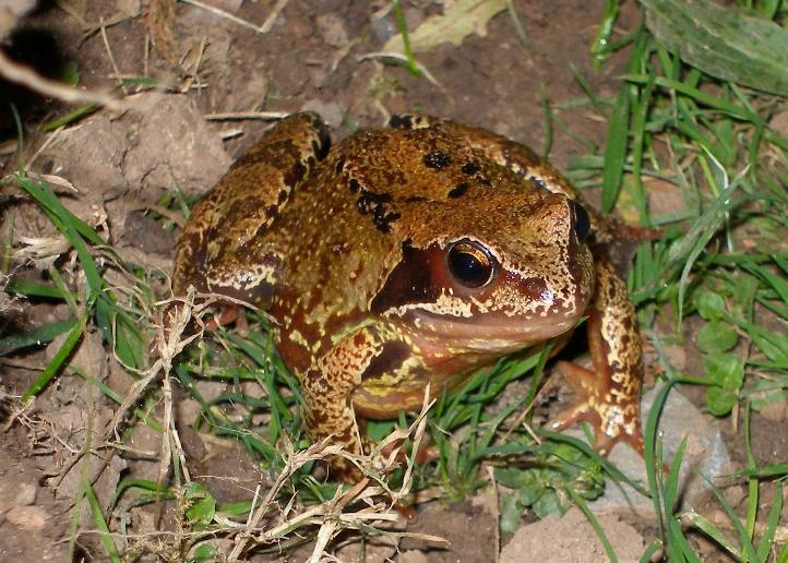 March 2010 The Garden Pond Blog