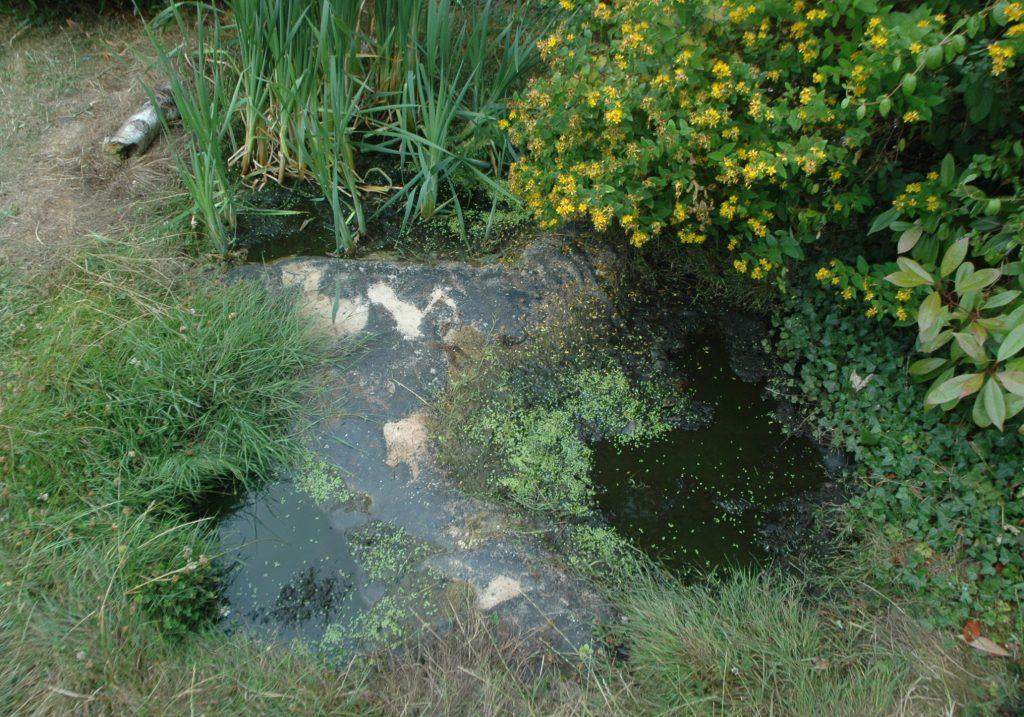 How deep does your pond need to be the garden pond blog for Garden pond depth